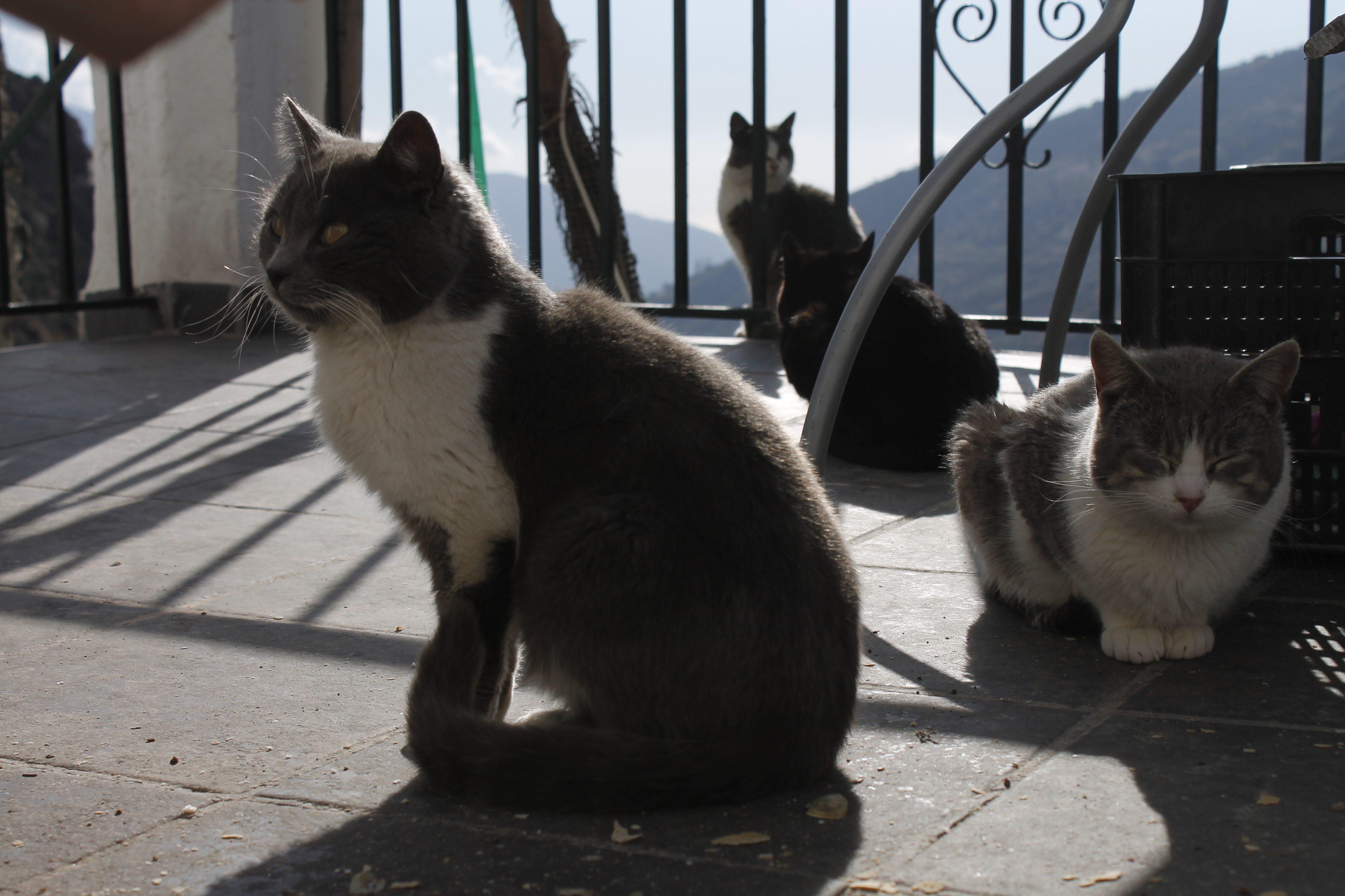 Four kitties on a terrace | AlternativeTravelers.com
